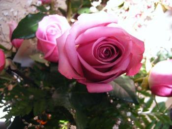 Rosesjune